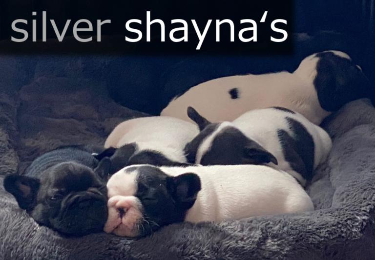 Logo silver Shynas