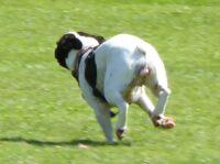 Aktivitäten Hunderennen